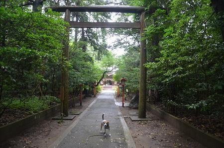 20180621熊野神社11
