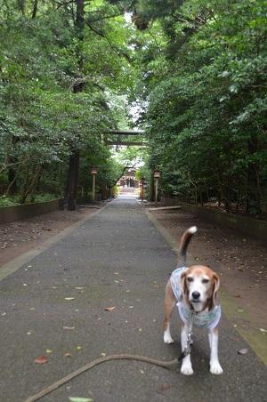 20180621熊野神社09