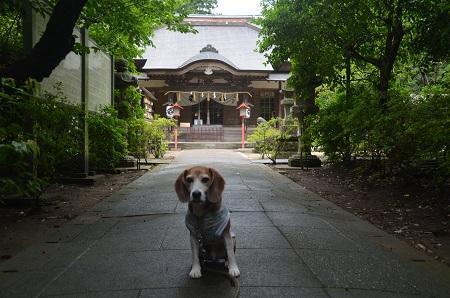 20180621熊野神社14