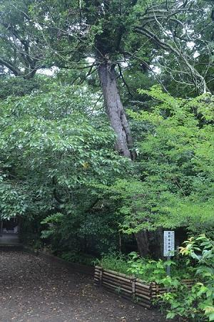 20180621熊野神社39