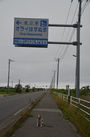 0180621道の駅 オライ蓮沼02