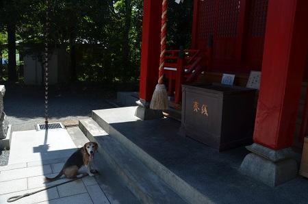 20180709南大沢八幡神社13