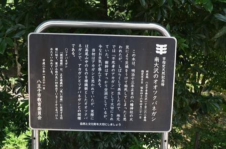 20180709南大沢八幡神社27