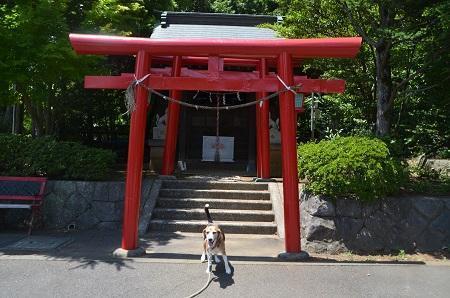 20180709南大沢八幡神社34