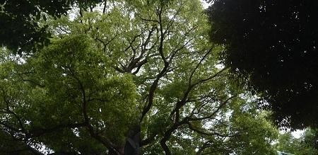 20180705立石熊野神社30