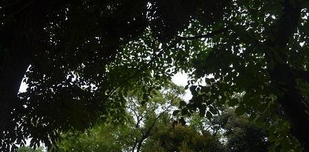 20180705立石熊野神社33