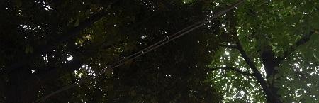 20180705立石熊野神社32
