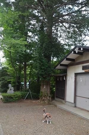 0180715白幡神社21