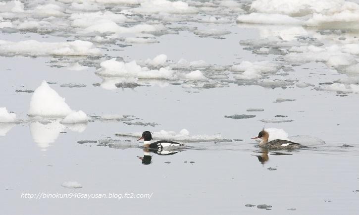 流氷 タンチョウ 129-A-1
