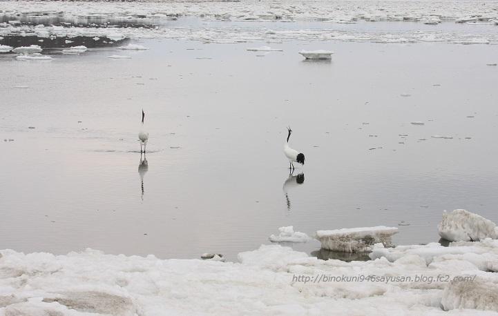 流氷 タンチョウ 011-A-1