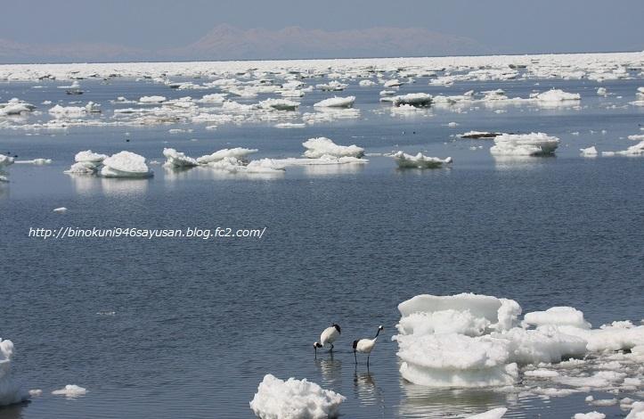 流氷の丹頂、エゾシカⅡ 040-A-4