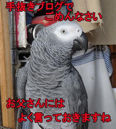 5_手抜き