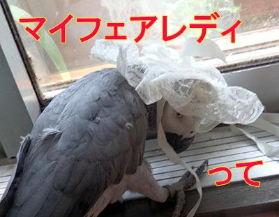 2_フェアレディー