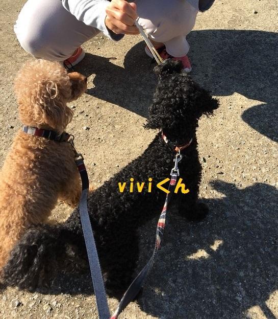 vivi②