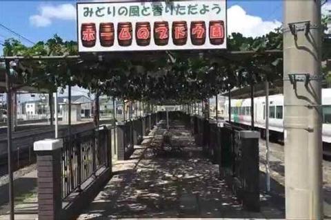 【JR中央本線】塩尻駅3・4番ホームブドウ棚
