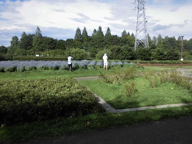 3 18.8.9 花の丘公園ほか (51)