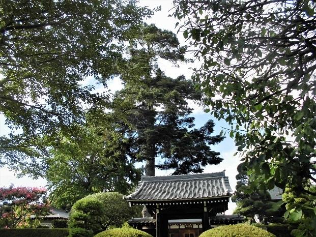 8 18.8.9 花の丘公園ほか (110)