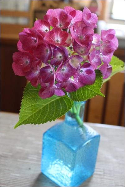 003紫陽花