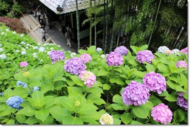 114長谷寺