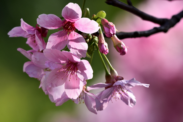 萌える春(3)
