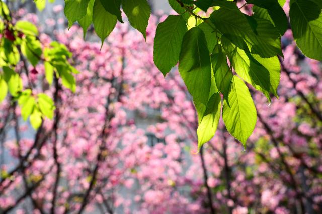 萌える春(2)