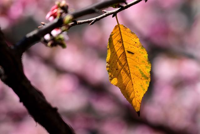 萌える春(1)
