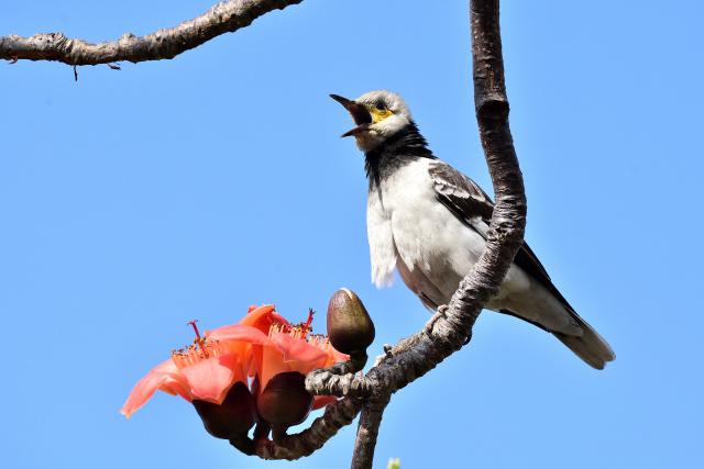 木綿の木と野鳥(2)