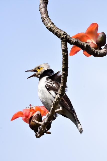 木綿の木と野鳥(1)