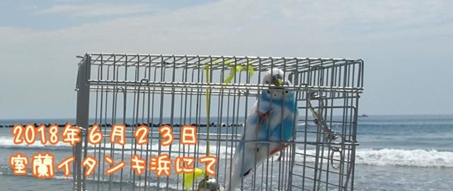 珠霞 空色のセキセイ 海 インコ 室蘭 イタンキ浜 タイトル