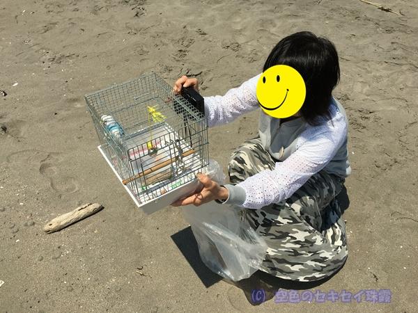 珠霞 空色のセキセイ 海 インコ 室蘭 イタンキ浜