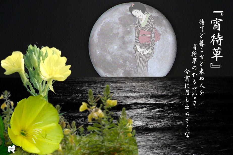 宵待草 合成 ♪