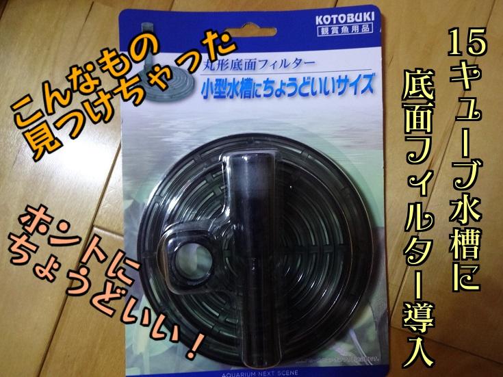 DSC07845 - コピー