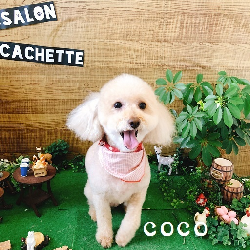 coco 太田