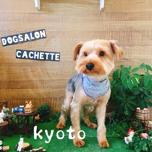 kyoto 野原