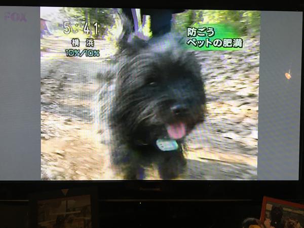 06おはよう日本2
