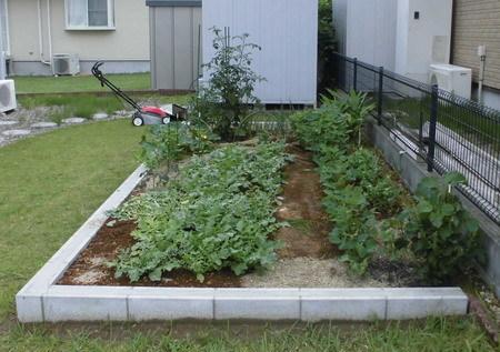 菜園20180618-1