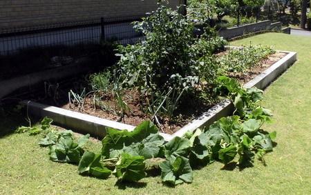 0701菜園2