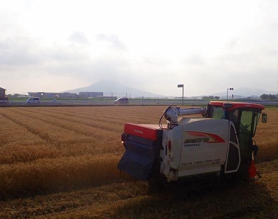 2018.06.10麦刈り1