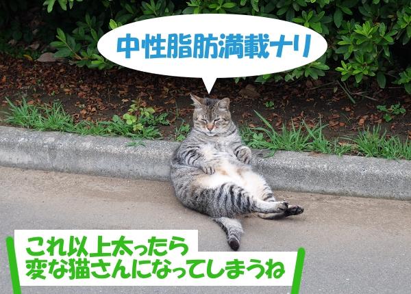 中性脂肪満載ナリ 「これ以上太ったら変な猫さんになってしまうね」