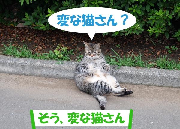 変な猫さん? 「そう、変な猫さん」