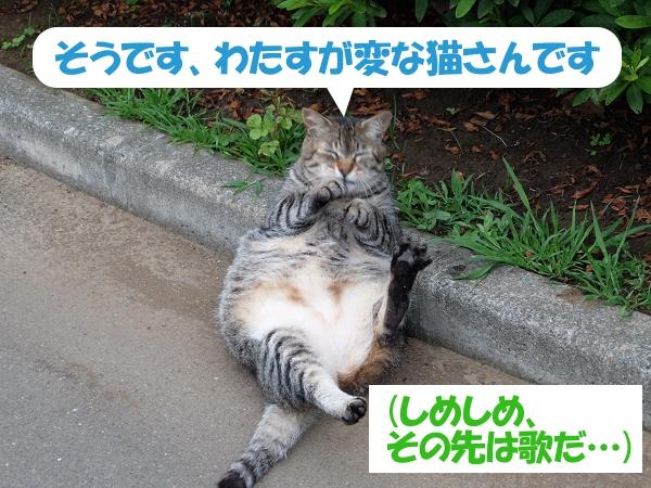 そうです、わたすが変な猫さんです (しめしめ、その先は歌だ…)