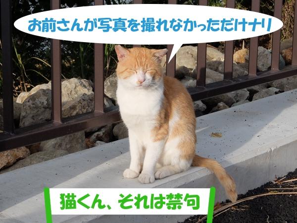 お前さんが写真を撮れなかっただけナリ 「猫くん、それは禁句」