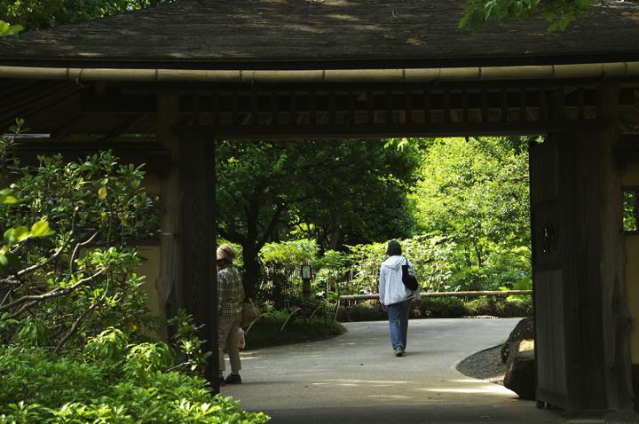 日本庭園-932