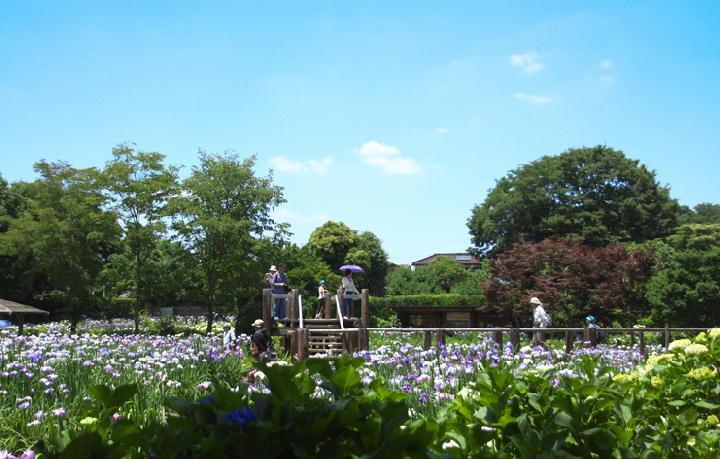 菖蒲園-226