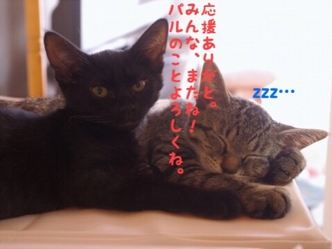 fc2blog_20180725235203d54.jpg