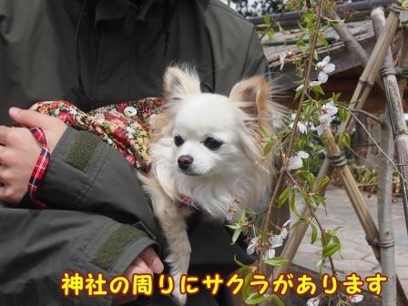 bloga668a.jpg