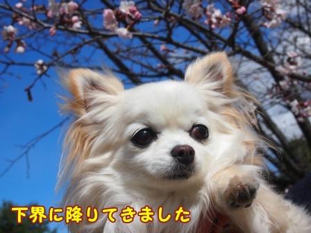 bloga679a.jpg