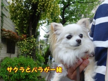 bloga718a.jpg