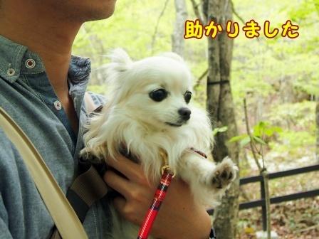 bloga846a.jpg