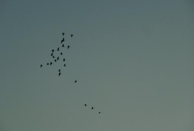 瀬戸内海の日の出 (2)